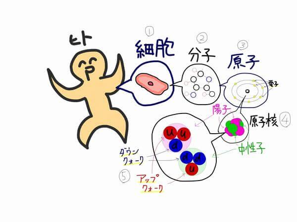 中性子や陽子はクォークといった素粒子にまで分解