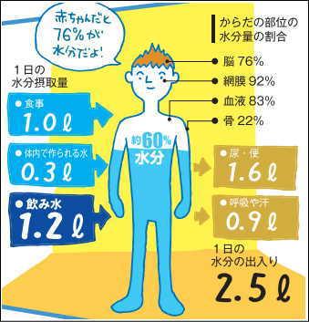 身体の次の部位は、水分含有量