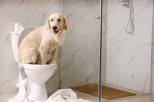 これで納得!トイレ掃除をすると運氣が上がる5つの理由